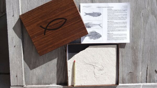 Fossil Kit, Do-it-yourself preparation kit with actual fossil and  instructions