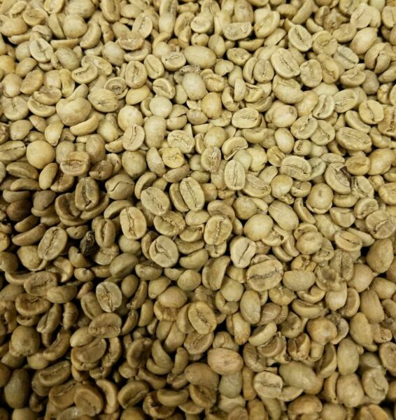 Honduran Green Coffee Beans Up To 100 lbs