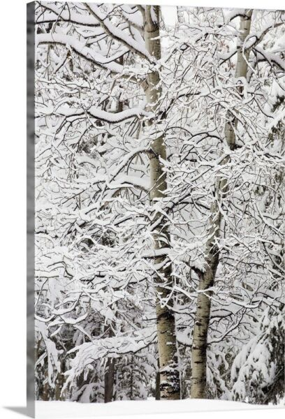 Snow Covered Trees Kananaskis Country Canvas Wall Art Print Tree Home Decor