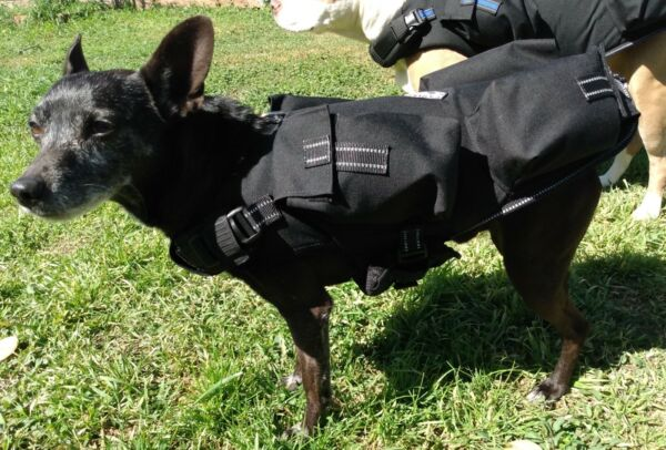 CANINE WEIGHT SET® Weighted Animal Vest® Small: 10 LBS Dog Size: 20 40 LBS. $89.99