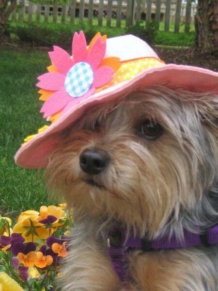 Dog Supply CO Pink Flowers Felt Dog Canine Costume Hat One Size $19.99