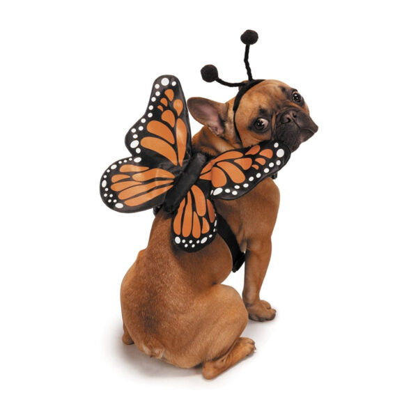 Zack amp; Zoey Butterfly Glow Harness Costume for Dogs Small $29.99