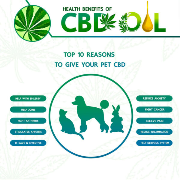 ** CBD Healthy Animals .com **  Domain  **  Get Rid Of Pet Arthritis