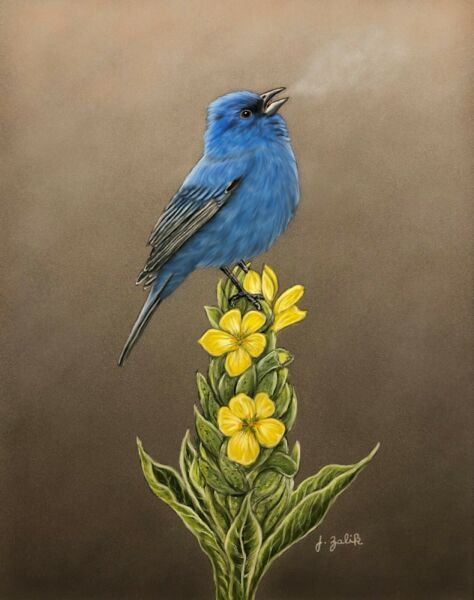 Indigo Bunting Print Painting Art Home Decor Wall Spring Songbird Blue
