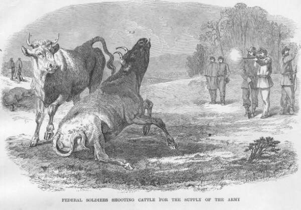 Soldiers Shoot Cattle For Food 1863 CIVIL WAR PHOTO AU $8.50