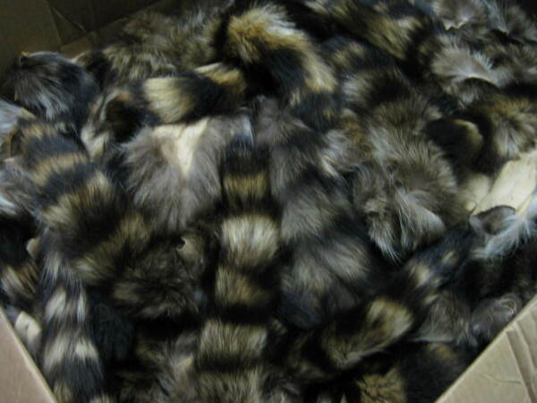 Large Tanned Raccoon Tail  Coon  Fur  Crafts  1 Tail Only # 1  ID Tag Red $7.89