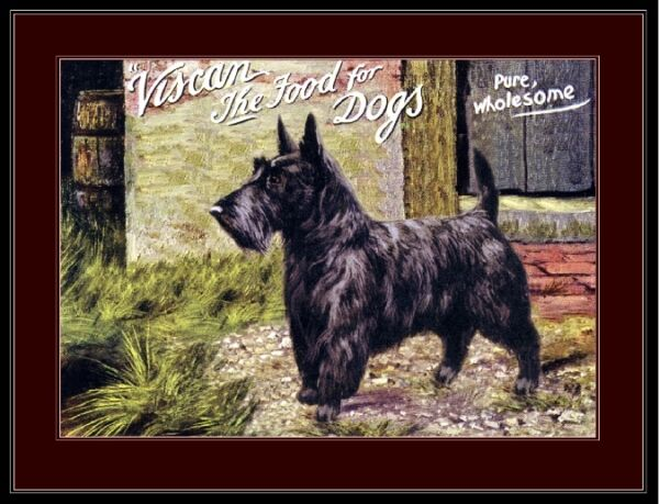 English Print Scottish Terrier Dog Dogs Biscuit Advertisement Vintage Art Poster $7.99