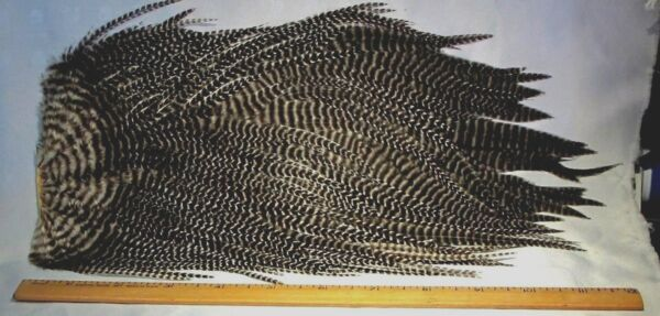 10% DISCOUNT SALE Select Genetic  Grizzly Saddle Hackle NEW