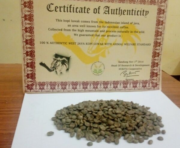 Pure Authentic Arabica Kopi Luwak Coffee Green Bean UNROASTED 40 Lbs Certified