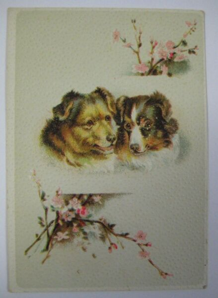 Collie Dogs LION COFFEE Trade Card Woolson Spice Co. Embossed Antique Vintage