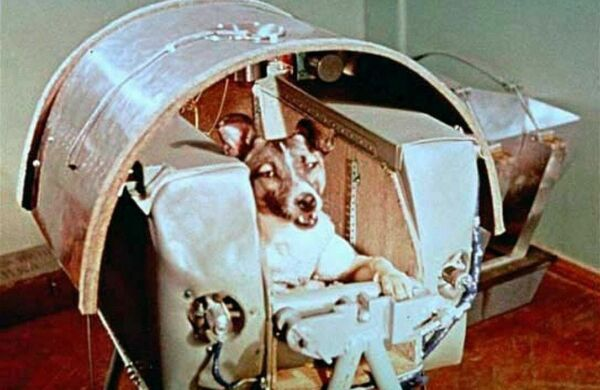 First Dog to Orbit Earth PHOTO Laika the Space Dog Soviet Union Program Flight $4.38