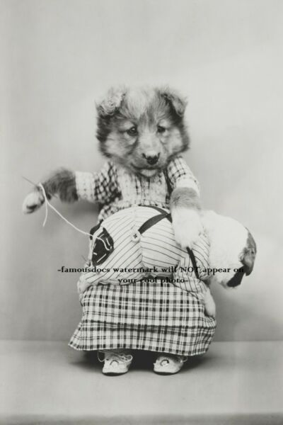 Vintage Dog Sewing PHOTO Funny 1900s Puppy Playing Seamstress Room Decor Puppies $3.78