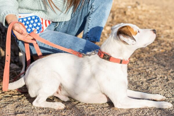 Euro Dog Soft Leather Dog Collar Adjustable Quick Release Buckle Made in USA Aff $21.99