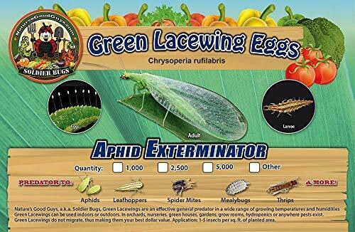 Green Lacewing 1000 Eggs Good Bugs Aphid Exterminator by The Future $13.99
