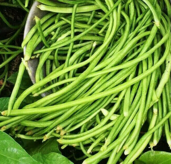 White Yard Long Bean Seeds Organic USA Asparagus Green Asian Chinese For 2021 $3.80