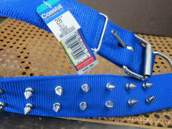 New Coastal Spiked Dog Collar 28quot; Blue Double row of spikes $15.30