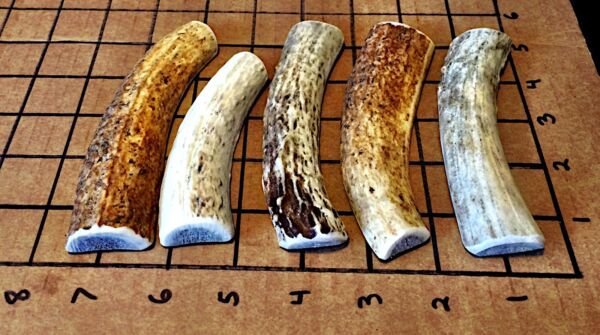 5 Small ElkDeer Split Antler Dog Chew...HARD MARROW...Free Shipping...durable!