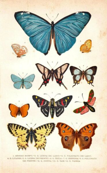 Postcard: Vintage print Repro - Nouveau Butterfly Chart - Blue Yellow Orange