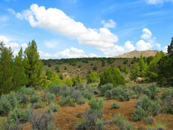 ULTRA RARE 40 ACRE ELKO NEVADA RANCH