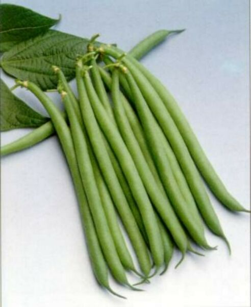 Haricot Verts Petite Filet Green Bean Seeds 20 #x27;21 Seeds $1.69 Max Shipping