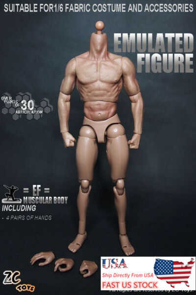 1:6 Scale ZC Toys Muscular Body Fit 12