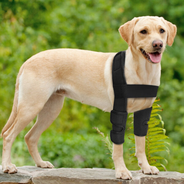 Small Large Dog Leg Brace Hock Protector Therapeutic Dog Front Leg Elbow Straps $13.99
