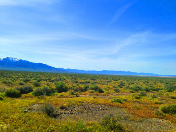 RARE 40 ACRE EUREKA COUNTY NEVADA RANCH~ADJOINS BLM LAND  CASH SALE! NO RESER