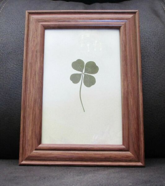 Real Four Leaf Clover (Large) in an Oak Stain Look  Vintage Look Summer Frame