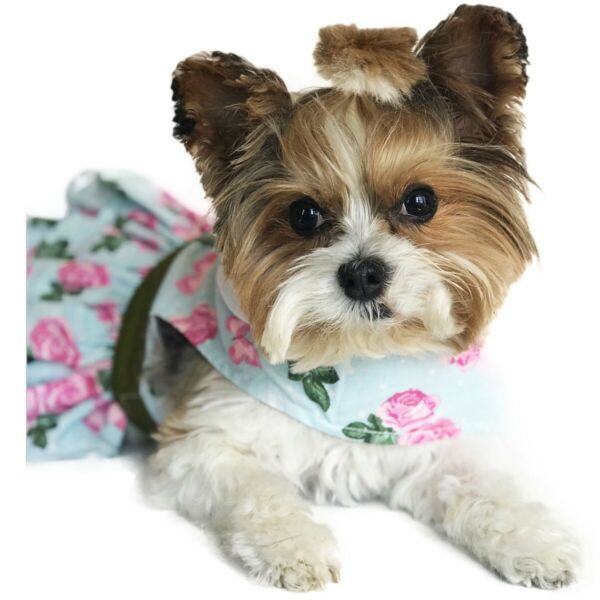 Dog Dress chihuahua x small teacup Dog Designer Dress with Leash Pink Roses New $28.95
