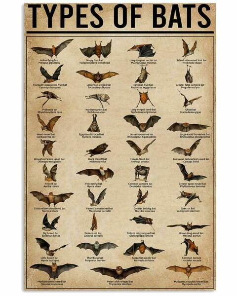 Types of Bats Vertical Wall Decor Poster Types of Bats Vertical Decor No Frame $25.99