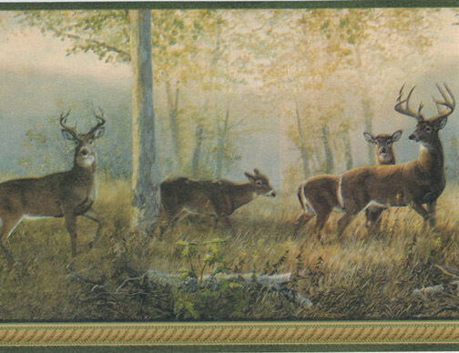 Northwoods Forest Deer with Green Edge Wallpaper Border TLL44341