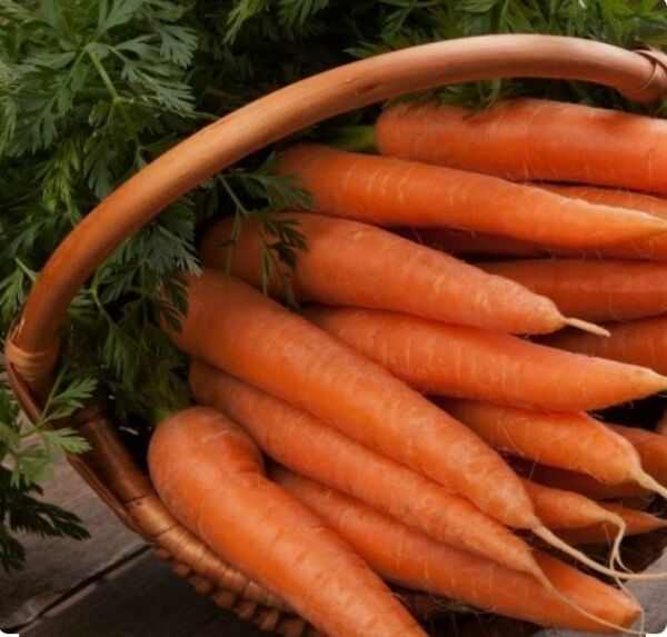 250 Danvers 126 Carrot Seeds - Non GMO-Open Pollinated-Organic.