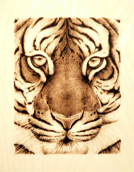 TIGER FACE- BIG CAT ART- ORIGINAL ANIMAL DRAWING - PYROGRAPHYWOODBURNING