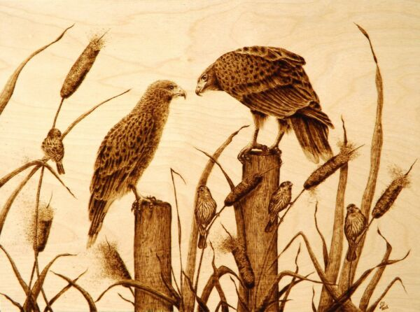 ORIGINAL ANIMAL ART- HAWKS- DRAWINGPYROGRAPHYWOODBURNING-