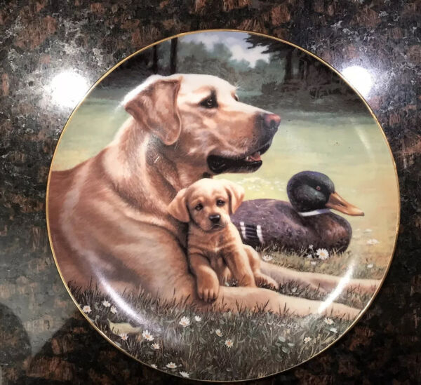 Golden Labrador Dog quot;Like Father Like Sonquot; Decorative Plate $19.90