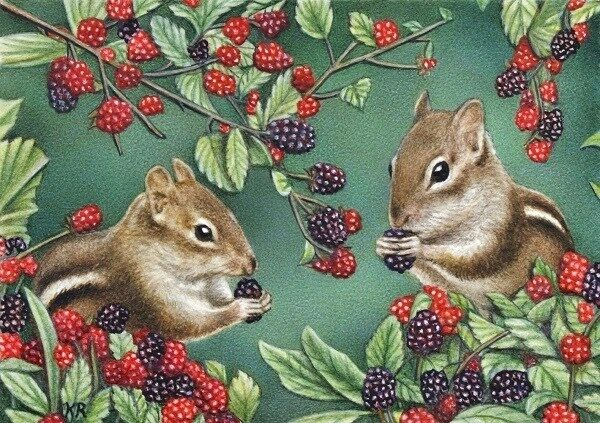 chipmunk wildlife animals berries woodland creatures limited art print aceo KR