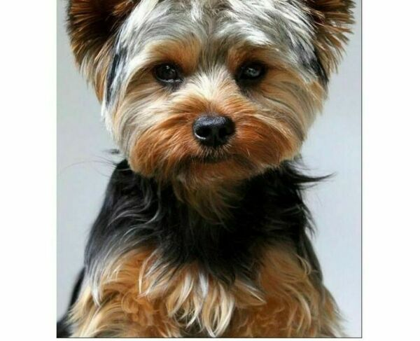 Dog Patterns Diamond Paintings Full Pasting Mosaic Painting For Home Decorations $10.49