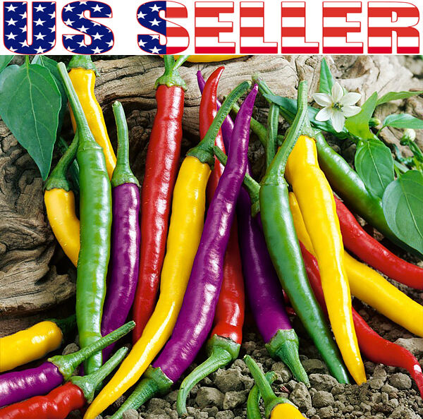 30+ ORGANIC Cayenne Rainbow Mix Pepper Seeds Heirloom NON-GMO Purple Yellow USA