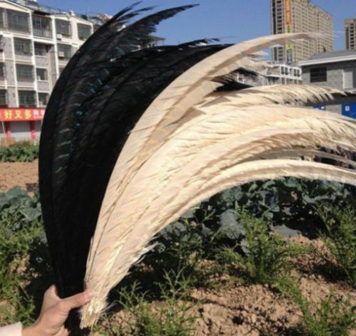 Wholesale! 102050100200pcs Lady Amherst Pheasant feathers 32-36inch80-90cm