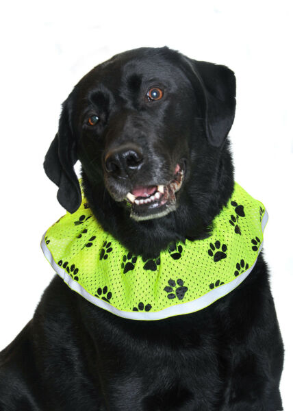Dog safety hi visibility decorative collar Size L New in Bag Made in the USA $14.98