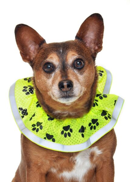 Dog safety hi visibility decorative collar Size M New in Bag Made in the USA $14.98