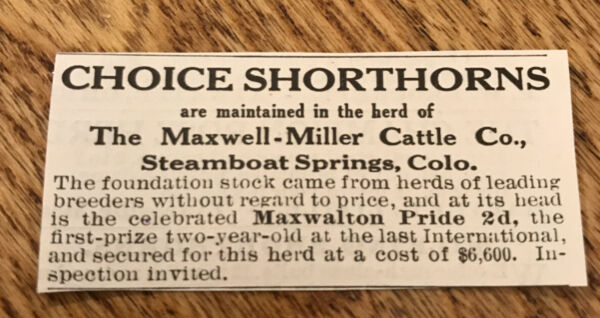 1917 Shorthorns Cattle Advertising Cow Steamboat Springs Colorado