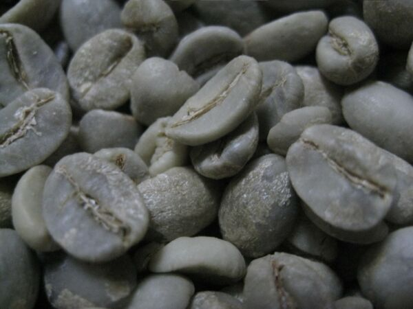 One Pound Unroasted Green Arabica Coffee Beans Grown in Yunnan China