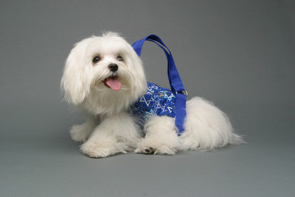 Hanukah blue white star pet small dog carrier harness sling puppy purse cotton M $20.00
