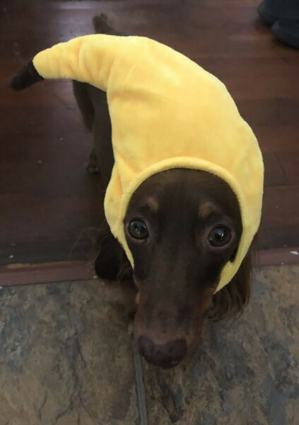 Banana Head costume for cats and small dogs Funny Costumes $9.75