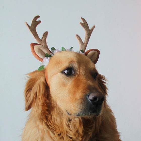 Antlers for Dogs Funny Costumes $9.95
