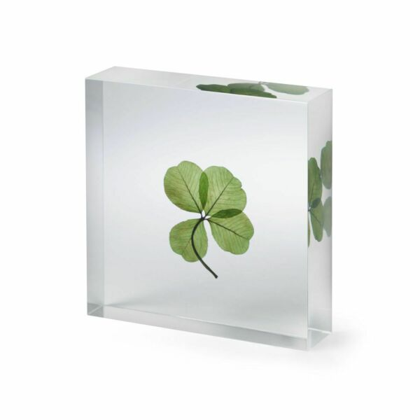 Genuine Four-Leaf Clover in Acrylic Square
