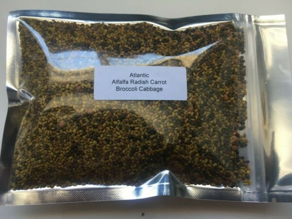 Microgreens Atlantic mix salad sprouts micro green Organic 5 Types of seeds
