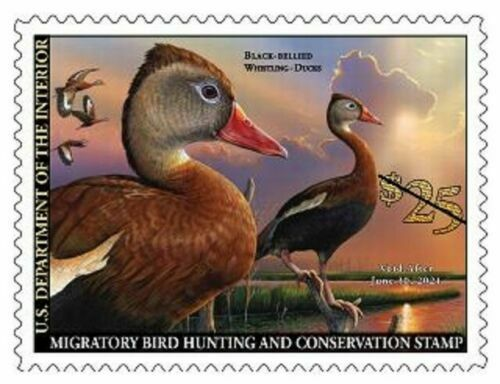 #RW87 2020 Federal Duck Stamp MNH