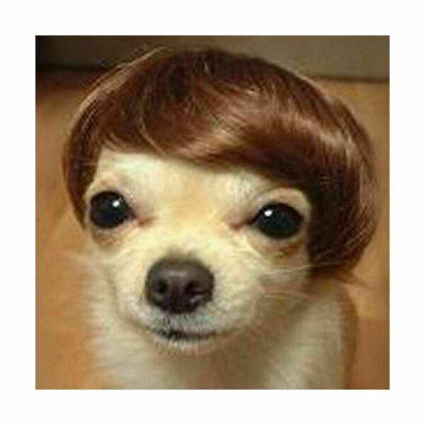 Dog Costumes colorfull synthetic hair pet wig lovely pet dog wigs Bob Brown TP21 $7.99